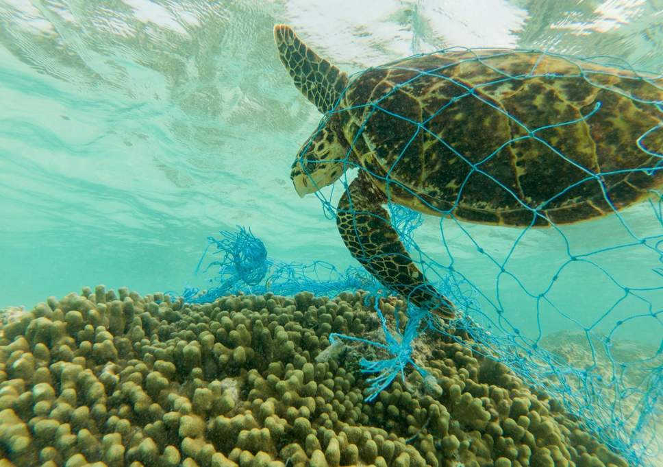 A day in the life of a sea turtle in an ocean full of plastics.