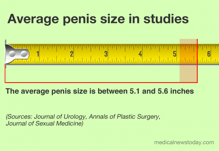 What size is the average penis?